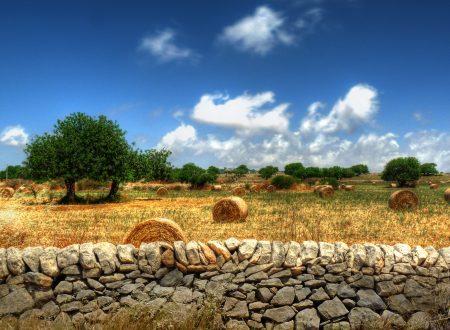 """L'agricoltura guida la """"ripresina"""" del Sud"""