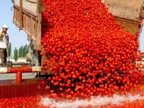 Quei pomodori cinesi che sbaracano a Napoli? Invertiamo la notizia (e la rotta)